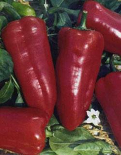 Бамия - описание выращивания и приготовления овоща; его ...